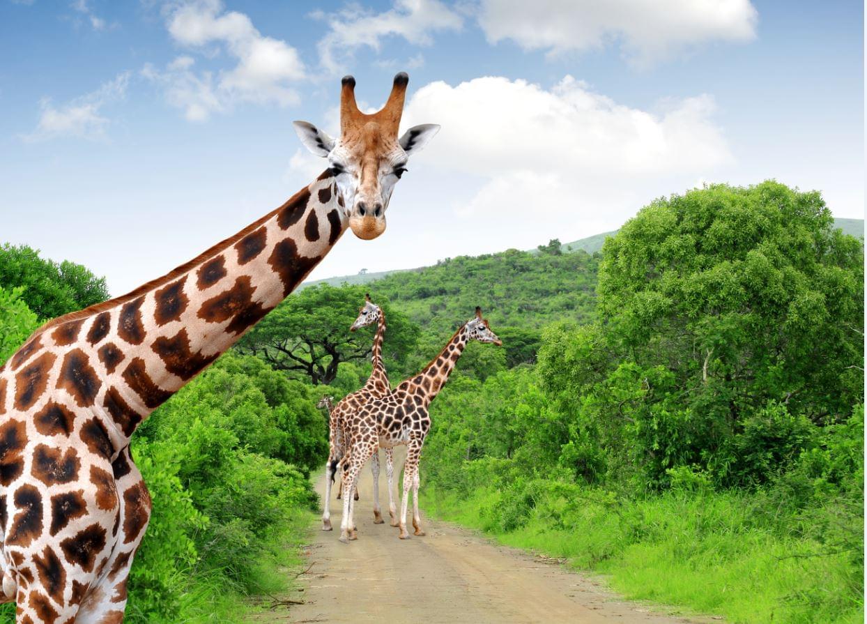Nederlandstalige groepsreizen Zuid-Afrika: Kruger National Park