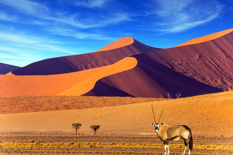Rondreis Namibië - Fly & Drive - Namib woestijn met Oryx