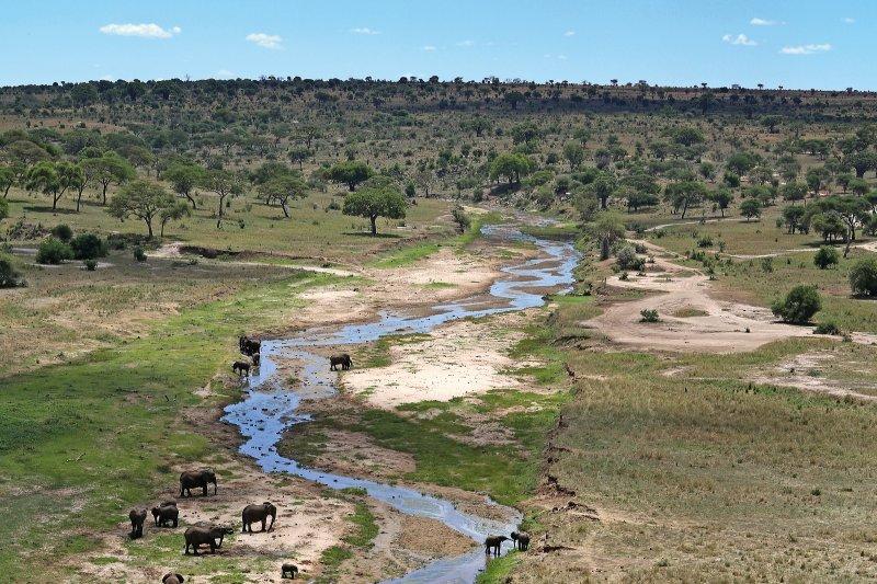 Tanzania - kudde olifanten