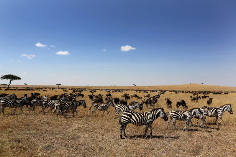 Tanzania - zebra's