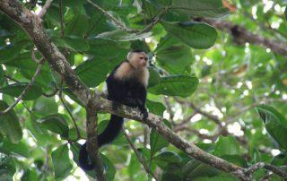 Costa Rica, de favoriete bestemming van collega Katrien - Aap