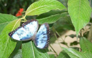 Costa Rica, de favoriete bestemming van collega Katrien - Vlinder