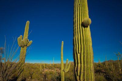 Deze 10 prachtige nationale parken in de VS kende u misschien nog niet - Saguaro National Park