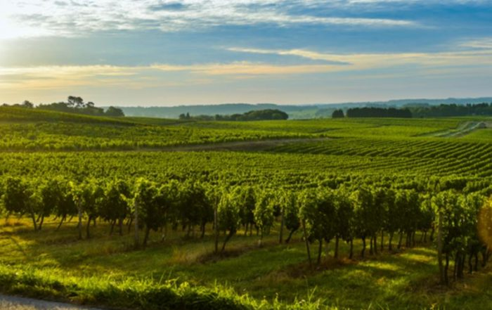 Bordeaux - Een luxueuze wijnervaring - Wijngaard