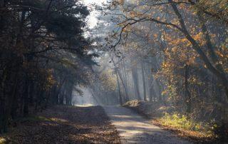 Beleef de warmste momenten tijdens de Winter Efteling - herfst in het Nationaal park De Loonse en Drunense Duinen