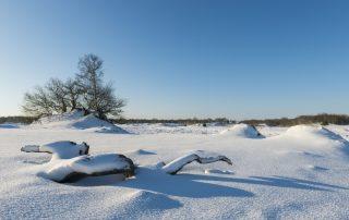 Beleef de warmste momenten tijdens de Winter Efteling - winter in het Nationaal park De Loonse en Drunense Duinen