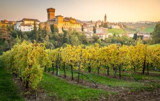 Emilia-Romagna - 2 tot 6 september 2019 - wijngaard - Italië