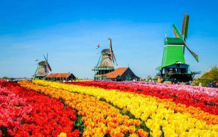 Riviercruise op de kanalen en rivieren van Nederland - Landschap met tulpen en traditionele windmolens - Nederland