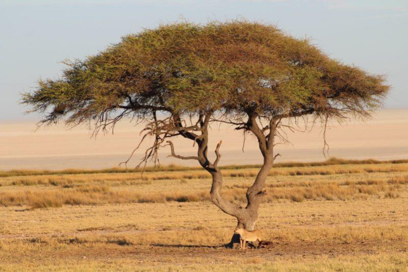Namibië, de favoriete bestemming van collega Dominique