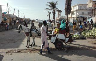Ontdek Senegal met het gezin - markt