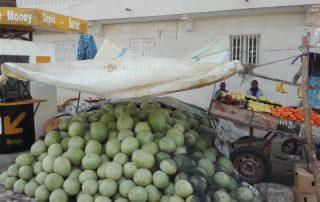 Ontdek Senegal met het gezin - meloenen
