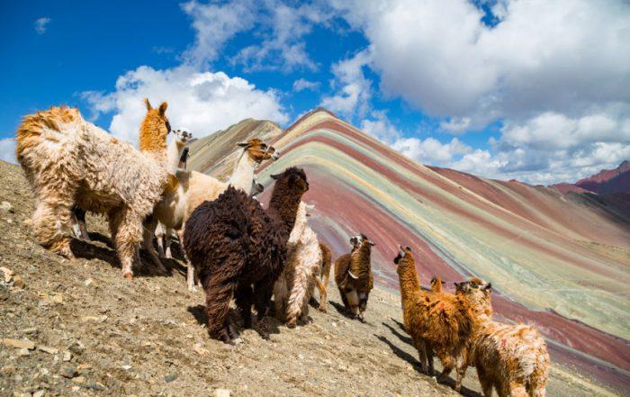 Rondreis Peru - Regenboogberg Vinicunca met lama's