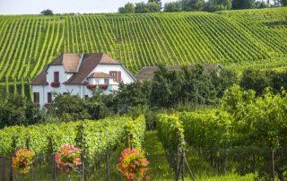 Hunawihr - Huis met wijngaarden