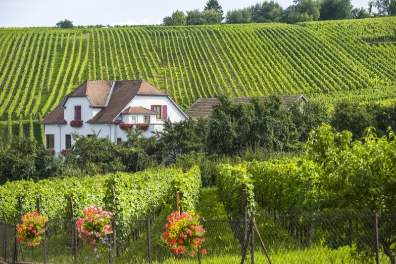 Straatsburg en Basel reis naar de Elzas - Hunawihr - Huis met wijngaarden