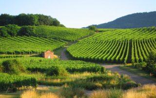 Wijngaarden in de Elzas