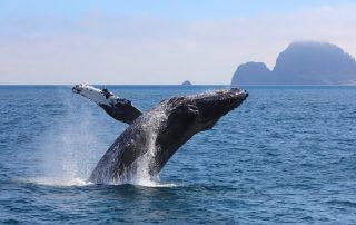 Rondreis Alaska - walvis Kenai Fjords National Park
