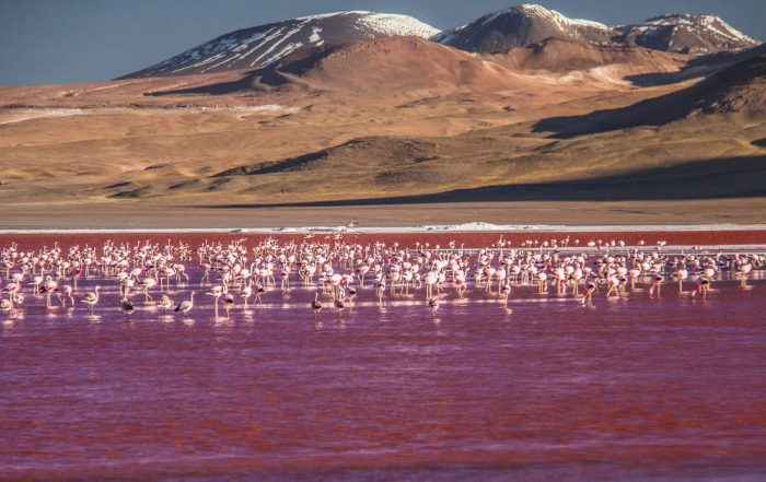 Rondreis Bolivië – Land van uitersten - Reserva Nacional de Fauna Andina Eduardo Abaroa
