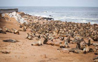 Rondreis Namibië - Cape Cross