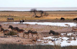 Rondreis Namibië - Etosha National Park