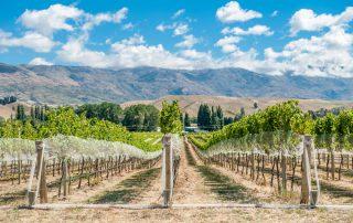 Rondreis Nieuw-Zeeland - Wijngaarden in Gibbston Valley