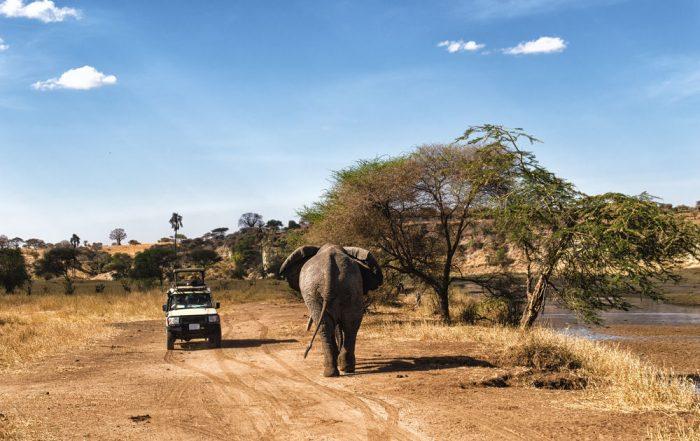 Rondreis Tanzania - safari in Serengeti National Park
