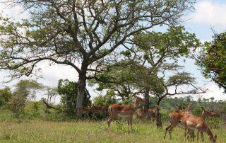 Rondreis Zuid-Afrika - Hluhluwe-Imfolozipark