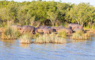 Rondreis Zuid-Afrika - Isimangaliso Wetland Park