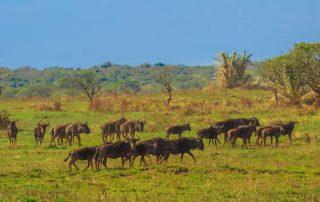 Rondreis Zuid-Afrika - Kruger National Park