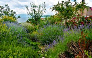 Geuren van de Provence - Mediterraanse tuin
