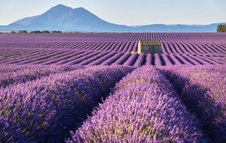 Geuren van de Provence - lavendelvelden