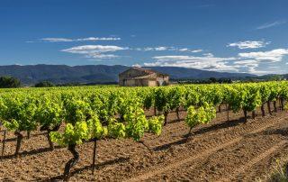 Geuren van de Provence - wijngaard in de Provence
