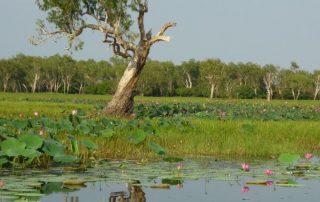 Australië, de favoriete bestemming van collega Valentijn - natuur in Australia