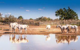 Rondreis Frankrijk - Camargue paarden - Saintes-Maries-de-la-Mer