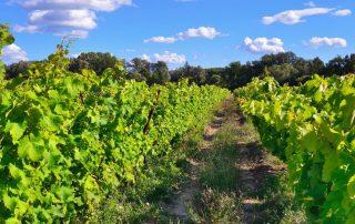 Rondreis Frankrijk - wijngaard - Mazan