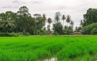 Rondreis Maleisië - Balik Pulau - Penang eiland - Maleisië
