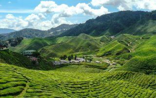 Rondreis Maleisië - theeplantage in de Cameron Highlands - Maleisië