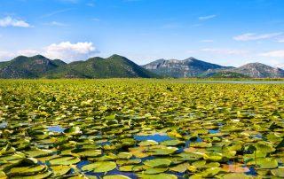 Rondreis Montenegro - Shkodër meer
