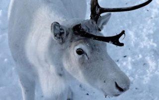 Noorwegen, tussen licht en donker - wild life