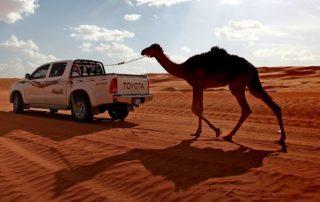 Oman, onwaarschijnlijk oppermachtig - Wahibi sands