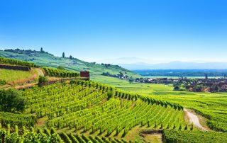 Stijlvol kasteelverblijf in de Elzas - panorama van de wijngaarden