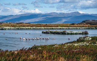 Rondreis Argentinië en Patagonië met Chileense afsluiter - Laguna Nimez in El Calafate