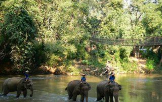Rondreis Thailand - olifanten