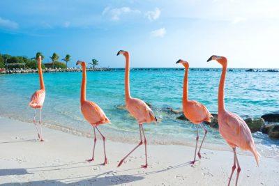 Winterzon op Aruba - roze flamingos