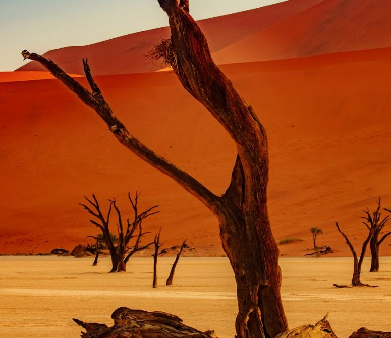 Met Patrick Van Damme naar Namibië