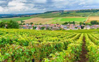 Champagne wijngaarden