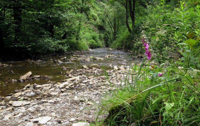 Weekendje weg naar de Ardennen - riviertje in de buurt van Spa