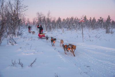 Zweeds Lapland - husky's