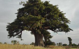 Senegal de favoriete bestemming van collega Anne - Baobab
