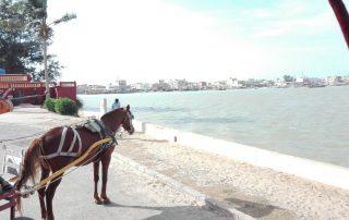 Senegal - Saint-Louis - Tour met caleche
