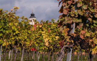 Wijngaard Wachau
